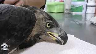 Claws out for shooter of KZN eagle
