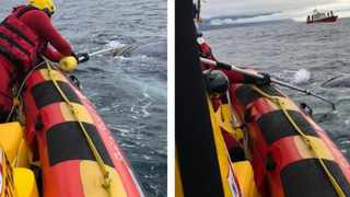 SAWDN volunteers successfully disentangled whale calf from ropes in False Bay. Photo: SAWDN/NSRI