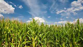 Zambia maize harvest increased by 69 percent, ensuring food security for a year. Photo:Facebook/Ministry of Agriculture and Livestock, Zambia