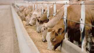 An application by a group of about 50 emerging farmers and other stakeholders to lift a nationwide ban on livestock auctions will be heard in the North Gauteng High Court on Tuesday. Photo: ANA File