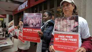 Kate Davies is standing with a poster. Almost 10 protesters staged a protest in front of Wimpy in St Georges Mall Street during lunchtime. Picture: Armand Hough/African News Agency (ANA)