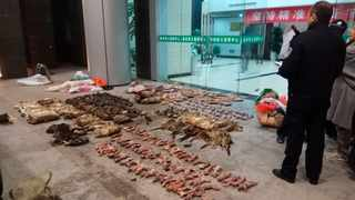 As China enforces a temporary ban on the wildlife trade to contain the outbreak of the new virus, many are calling for a more permanent solution before disaster strikes again. File picture: Anti-Poaching Special Squad via AP.