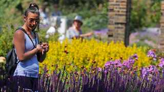 It also indicated that flowers have a long-lasting impact on our immediate workplace. Picture: AP