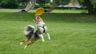 You can have fun throwing a tennis ball, a bundled-up rag cloth, a frisbee or even a football. Picture: IANS