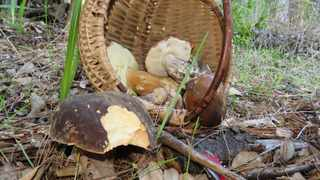 A basket of mushrooms from Cecilia Forest. Pic: Margarethie Bredenkamp