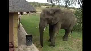 A video captured on CCTV at Greater Kruger National Park shows an elephant picking up litter. Picture: Twitter