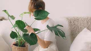 Your indoor plants need special care during winter. Picture: Pexels