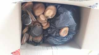 Abalone confiscated during a recent raid Picture: SAPS