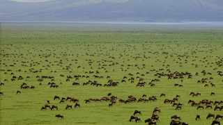 Jorge Ramos and his family loved the Serengeti National Park. Picture: Serengeti National Park.