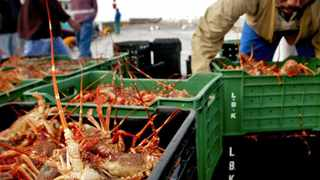 """South African fishermen offload their catch of Rock Lobster on the dock of Cape Town\'s Kalk Bay harbour, September 17, 2003. Overfishing and widespead poaching have led authorities to apply strict quota\'s on most of South African fishing resources, including the \""""red gold\"""" that has traditionally provided an income for many of the poor fishing communities along the country\'s west coast. REUTERS/Mike Hutchings---PICTURE TAKEN SEPTEMBER 17, 2003"""