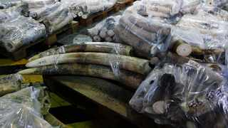 Australian Customs officials have seized a large shipment of illegal ivory while en-route to Malaysia from Africa, authorities announced.