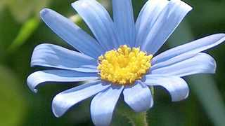 Fresh as a daisy? No, our countrys scent is a heady fragrance suitable only for those with a strong constitution.