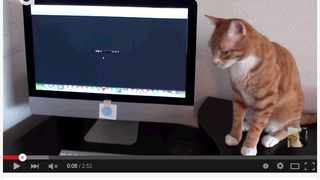 Marmalade listens to the music. Picture: Screenshot of the Cole and Marmalade channel on YouTube
