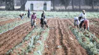 Comprehensive opinion polls commissioned by the IRR have repeatedly shown that most black South Africans have little interest in land reform. Picture: Siphiwe Sibeko/Reuters