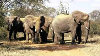 A herd of elephants at the Dinokeng Game Reserve. The reserve is now open for self-drives. Picture: Bongani Shilubane/ANA