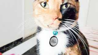 Baby, a mottled black, white and orange calico cat, disappeared without a trace. Michaila Pirie, Baby's owner, has offered a R4 000 reward for the cats safe return. Picture: Supplied