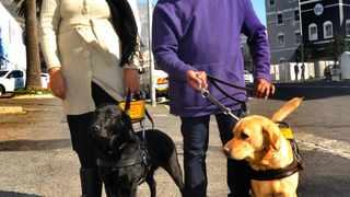 Adrian and Sharon Davids of Strandfontein with guide dogs Lily and Whisp.