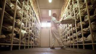 A forensic expert works in a morgue. Provincial mortuaries are buckling under a high load of unidentified bodies. File photo: Damir Sagolj/REUTERS.