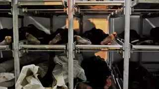 There are 230 unidentified bodies in storage at Salt River mortuary alone.