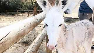 Hope was born at the Karoo Donkey Sanctuary earlier this week to one of eight expectant mares which were rescued during an operation in Bot River. Picture: Supplied