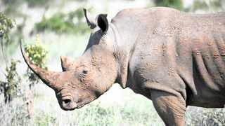 Major-General Johan Jooste, head of Special Projects at SANParks, says rhino poaching will not end while communities where rhinos are found are poor. Picture: Armand Hough