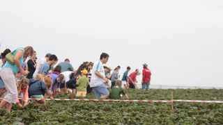 The annual Ballito Strawberry Festival will take place in August.