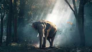 The rarity of cancer in elephants may help explain cancer in humans. Picture: pexels.com