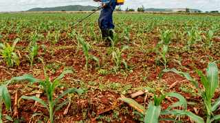 A worker sprays a newly planted field of corn with Methomyl 90 SP insecticide to protect against an infestation of fall armyworms, also known as Spodoptera frugiperda, on a farm north of Pretoria, South Africa, on Friday, Feb. 10, 2017. South African banks and the wider business community have closed ranks on the ruling party's plan to amend section 25 of the constitution. Photographer: Waldo Swiegers/Bloomberg