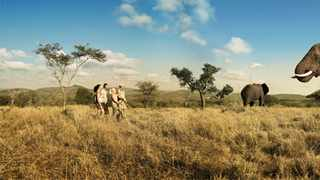 Elephant sightings in a North West game reserve. Picture: Supplied