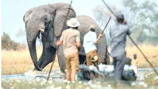 Dr Steve Boyes and team members encounter elephants while traversing the Cuito River, one of two main tributaries feeding the Okavango Delta. | NATIONAL GEOGRAPHIC