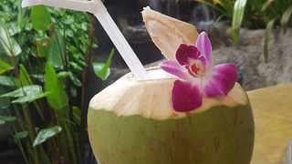 No one can resist a drink served in a coconut. Picture: Clinton Moodley.