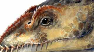 AUSTRALIA PREHISTORIC ANIMALS: MARINE REPTILES: An artist's impression of the recently discovered ancient marine reptile named Umoonasaurus. Australian scientists identified two new species of ancient marine reptiles, similar to the mythical Loch Ness monster, that swam in an Australian outback sea 115 million years ago. EDITORIAL USE ONLY NO ARCHIVES NO RESALES REUTERS/HO/South Australian Museum-Josh Lee