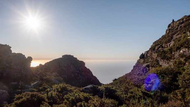 Dog poo angers SANParks Table Mountain National Park visitors