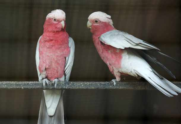 Not just for the birds ... but for love birds too