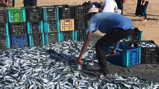 Sardines have been spotted in Port St Johns. Picture by Ugu South Coast Tourism