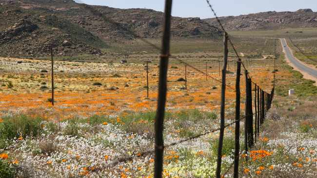 New book explores the hidden, captivating beauty of Namaqualand