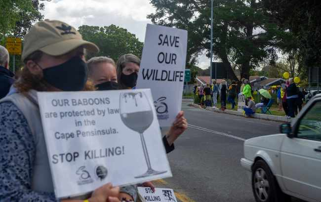 WATCH: Silent protest staged in support of 'displaced' baboon Kataza, Newsline