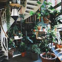 6 tips to help your houseplants thrive