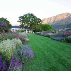 Big blousy blooms create architectural drama and lure biodiversity to this Franschhoek garden