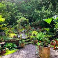 How to choose trees for your garden