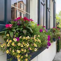 How to plant beautiful window boxes for every season
