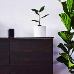3 Places to order plants online
