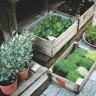 A beginners guide to gardening