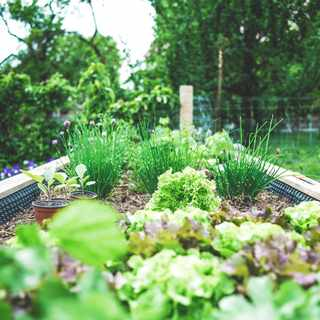 Edible gardening is a growing trend. Here's what it's about