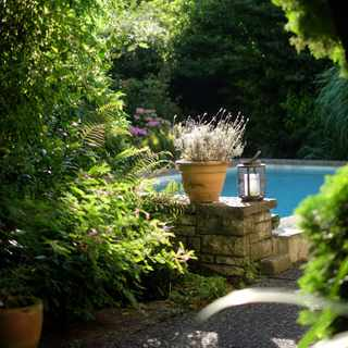 Give your garden wow factor this summer