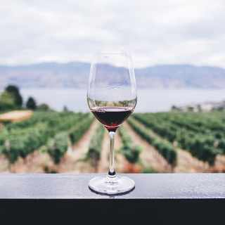 Here's all you need to know about vegan wines (plus the best ones to try)