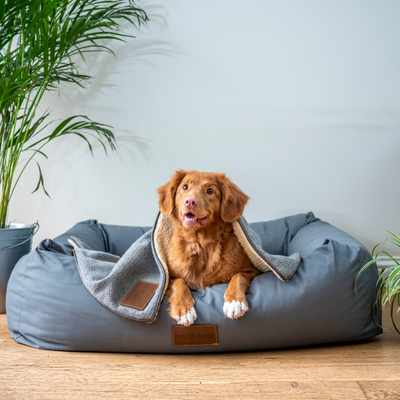 5 ways to make your living space more pet-friendly