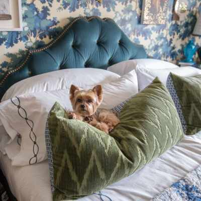 Designer advice for living well with dogs and cats