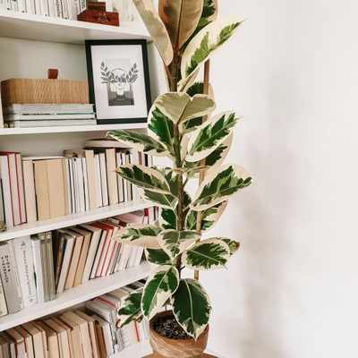 Here are the world's most instagrammable low maintenance plants