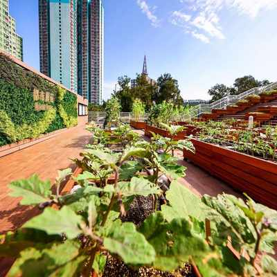 Rooftop Farms: The new way Hong Kong is gardening sustainably